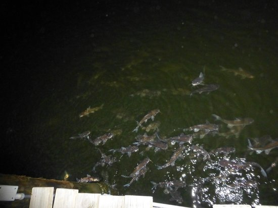 Tin City: This is what we saw from the dock at night!