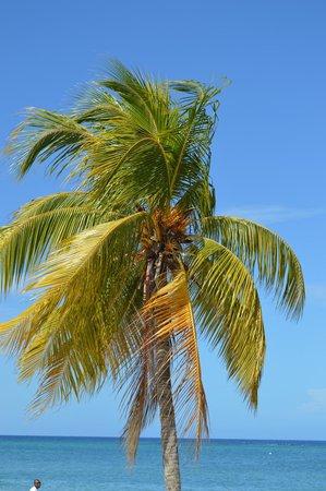 Sandals Montego Bay : Lovely palms