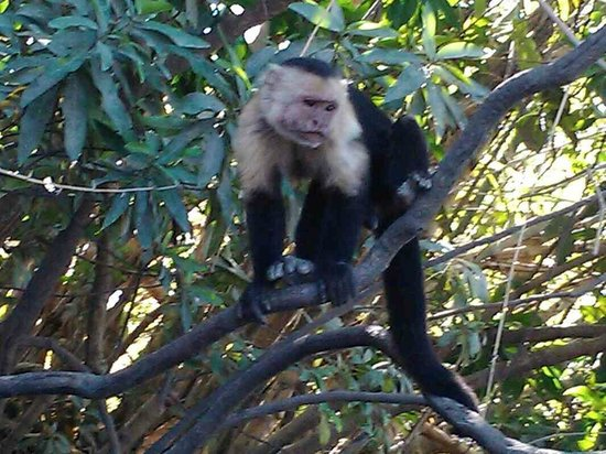 Extreme Costa Rica - Private Tours: monkey friends at palo verde (land tour)