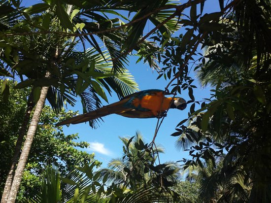 Excellence Punta Cana: The local fauna