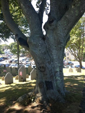Burial Hill: Tree that multiple people have been struck by lightning while sitting under