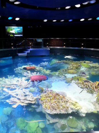 Top Of The Tank Picture Of New England Aquarium Boston Tripadvisor