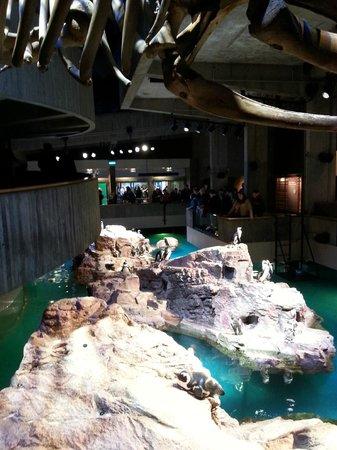 New England Aquarium: penguin exhibit