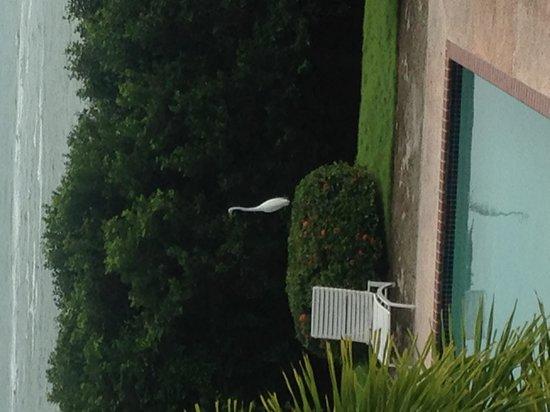 Parador Costa del Mar: pelicano