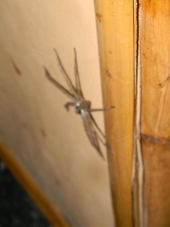 Rantee Cliff Beach Resort: jungle spider in the bathroom