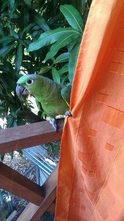 Principe del Pacifico: Silvio came by to say goodbye