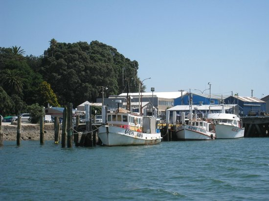 Kaimai Country Lodge: Take a trip into Tauranga and enjoy the famous fish 'n chips on the water front