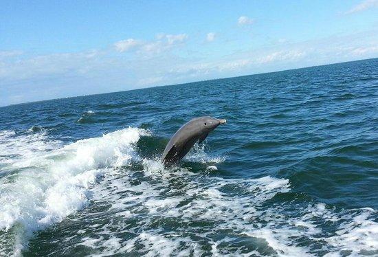 Captain Randys Fishy Business: Dolphin!  (Photo by Captain Randy)