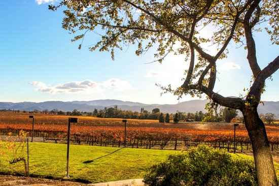 View from the patio, Mumm Napa