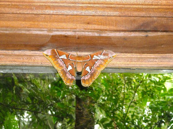 Rancho Makena: Purty Moth