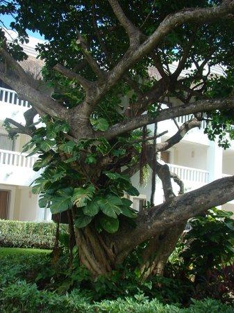 Grand Sunset Princess All Suites Resort : villegiature superbe