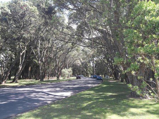 Cornwall Park : walking way