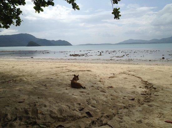 Cloud19 Beach Retreat : Beach
