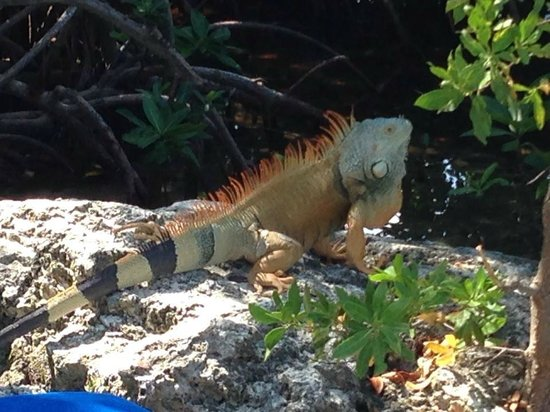 Key Largo Bay Marriott Beach Resort: Local Wildlife