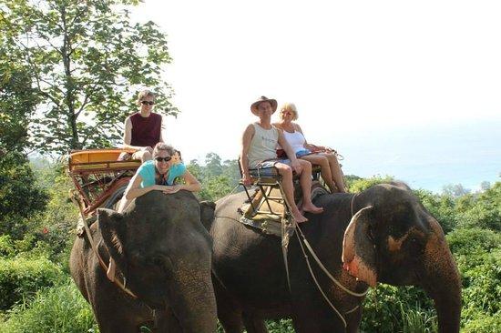 KokChang Safari Elephant Trekking: Picture perfect!