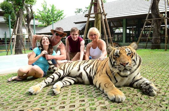 Tiger Kingdom: Hanging with Mike the tiger!