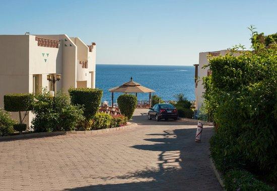 Shark's Bay Oasis Hotel: طريق الاتجاه للشاطى من الغرف وسط طريق مشجر باندر الاشجار واروعها
