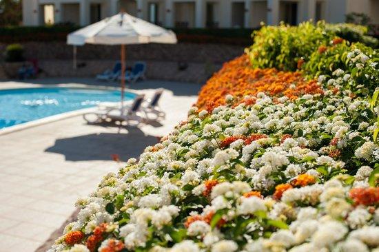 Shark's Bay Oasis Hotel: من اجمل الفنادق المطله على البحر للعائلات الكبيره والصغيره