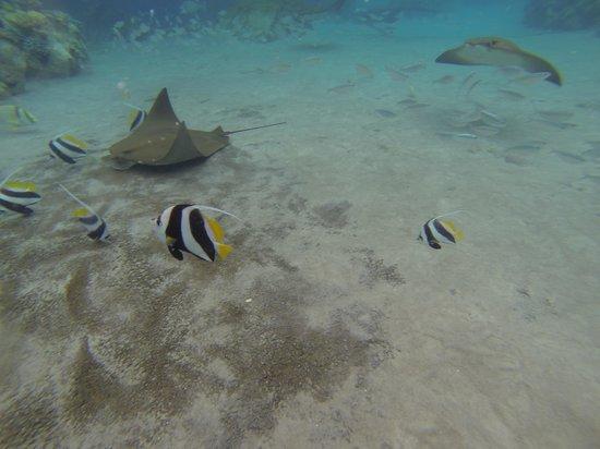 Discovery Cove: Foto1