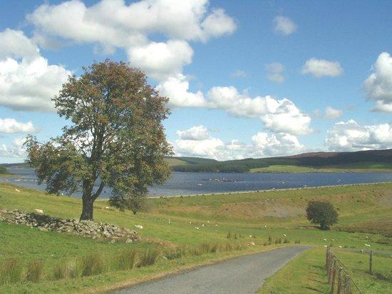 Llyn Brenig Visitor Centre: Rowan, with Llyn Brenig dam behind