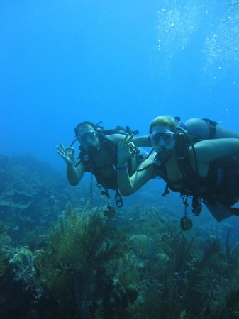 Blue Life Centro de Buceo: Under the Sea! Awesome, perfect.