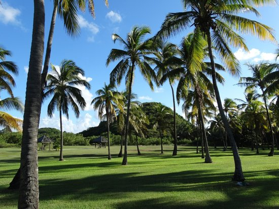 Palm Island Resort & Spa : Garden area