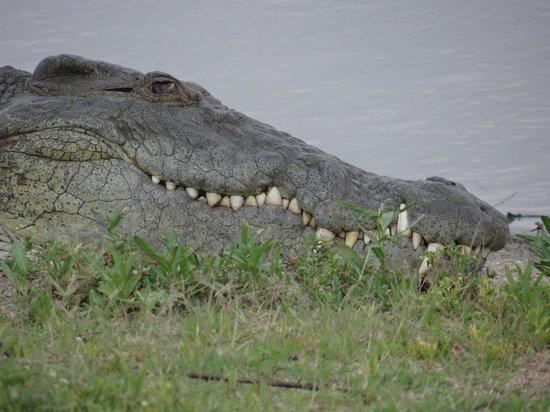 Idube Game Reserve Lodge : Happy Croc!