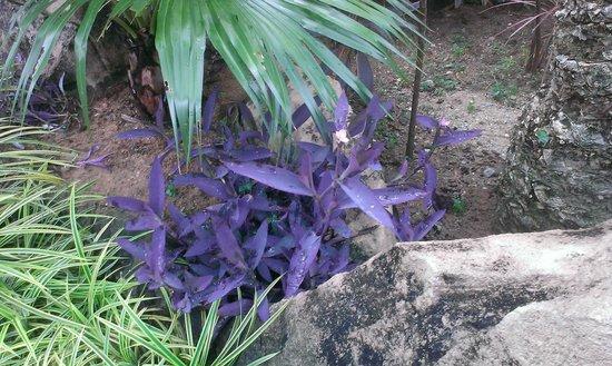 Sunway Pyramid Hotel: Plants