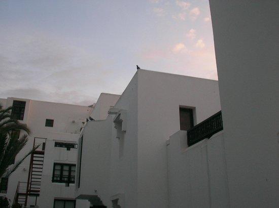Caribbean Village Agador: wegen den Möven vom Balkon aus fotografiert