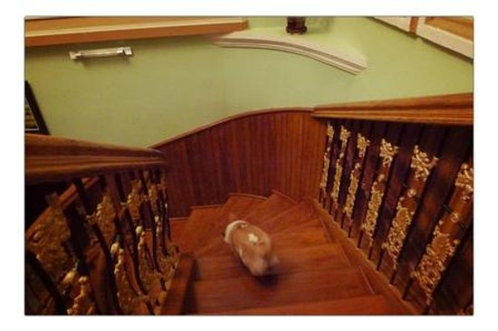 Queen Na Guest House: The stairwell that could be from the mansion in Gone with the Wind