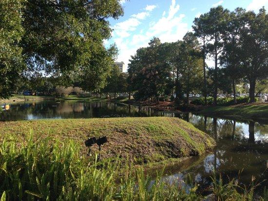 Hilton Orlando Lake Buena Vista: Lago em frente ao hotel