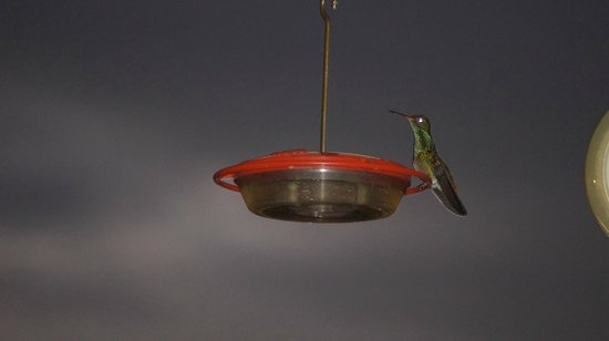 The Lodge At Big Falls : hummingbird feeder at the lodge