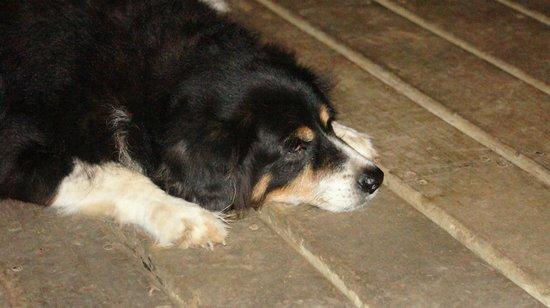 The Lodge At Big Falls : very sweet dog at the lodge.