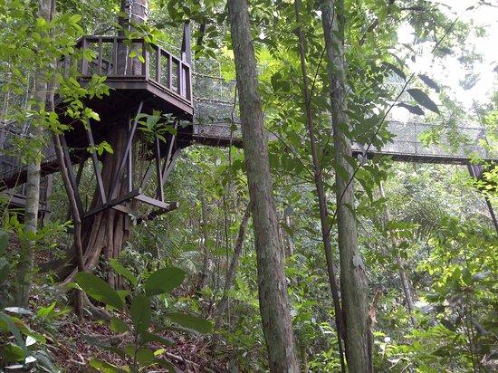 Shangri-La's Rasa Ria Resort & Spa : canopy walk