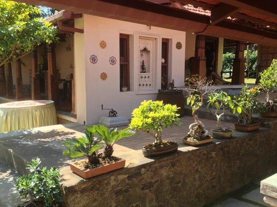 Thotadhahalli Home Stay : The wonderful Bonsai all around you