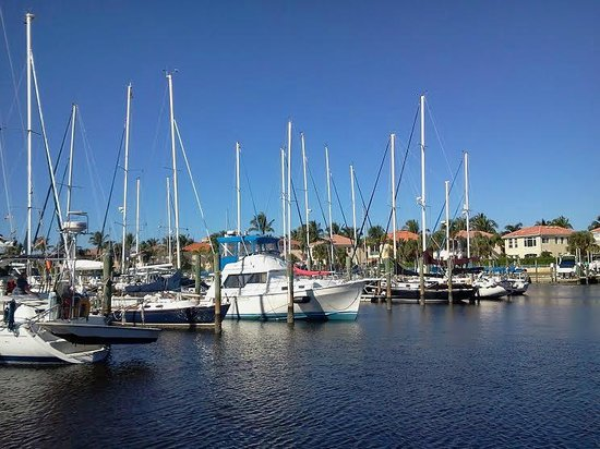 Calusa Queen Excursions: a beautiful view of the boats around the marina.
