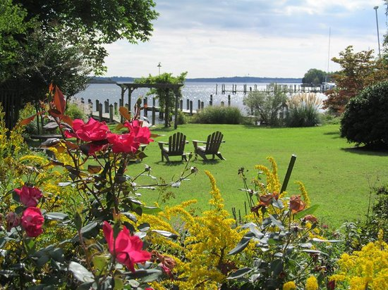 Back Creek Inn : Relax, sip some tea & watch the boats sail by...