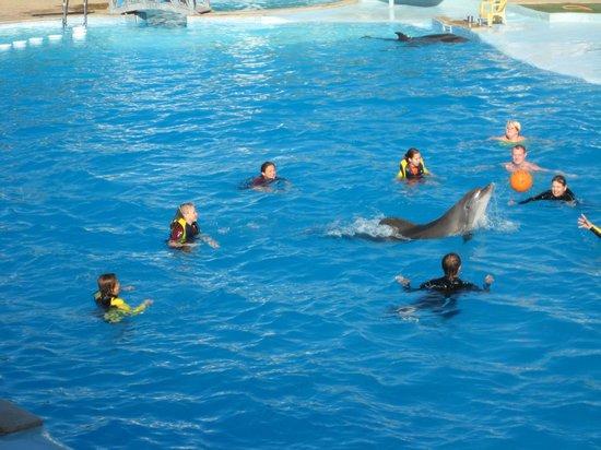 Dolphina Park: А ну ка отними