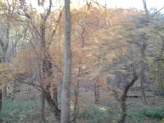 Wilmington and Western Railroad: Autumn colours