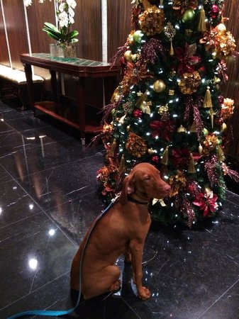 L'Hermitage Hotel: Happy Dog at L'Hermitage