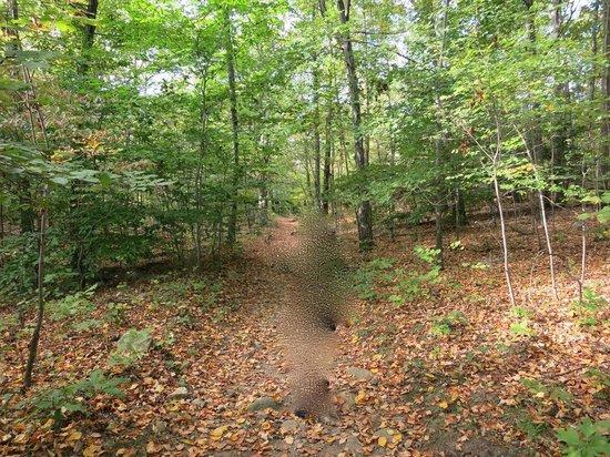 Harriman State Park: 落ち葉と紅葉前の葉っぱが混じるトレイル