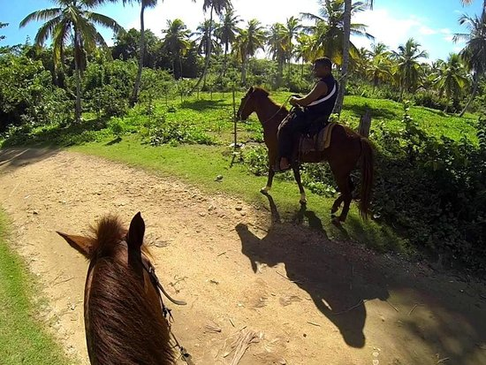 Chalet Tropical Village: Rudy' Horses