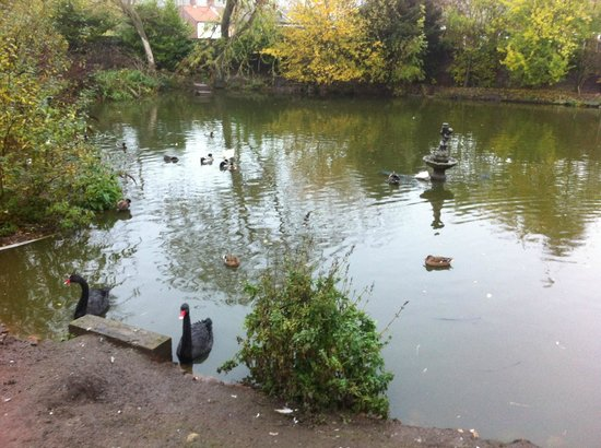 Elm Farm Country House: Duck pond