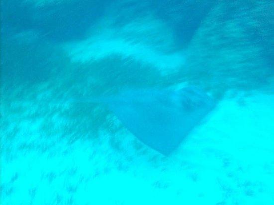 West Wind Club II: Ray I saw snorkeling