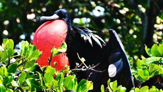 Mexico Kan Tours - Day Tours: Mexico Kan Tours birdwatching Fregate