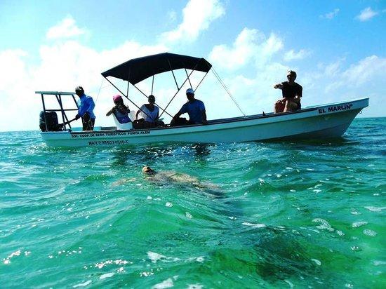 Mexico Kan Tours - Day Tours: Mexico Kan Tours Sian Kaan Adventure sea turtels