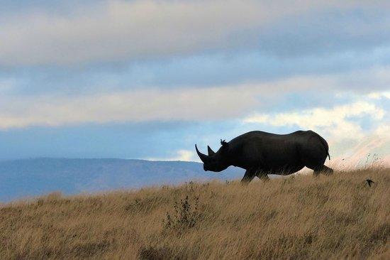 Access2Tanzania : Rhino in Ngorongoro Crater