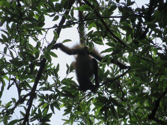 Pacz Tours: Monkey
