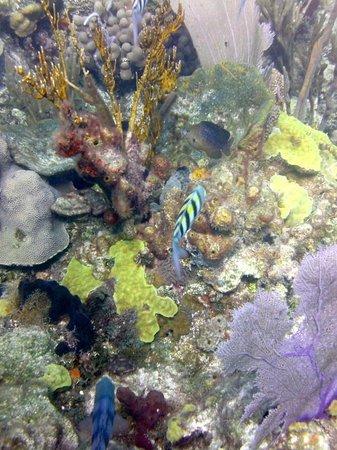 Bahama Divers: Colors