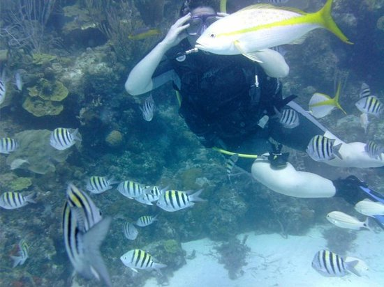 Bahama Divers: Fish in 2nd dive